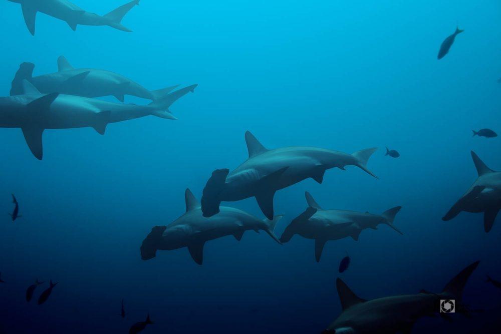 photo-20140218-Mexico-Diving-0000